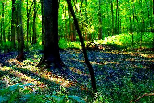 park autumn red fall nature ecology leaves pine mi forest river october midwest hiking michigan cedar paths deciduous breaktime redcedarriver okemos 2011 midmichigan vanatta greatlakesstate harrisnaturecenter puremichigan meridiantownshipparks