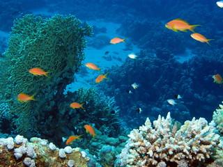 Reef scene at Marsa Shouna, Red Sea, Egypt #SCUBA | by Derek Keats