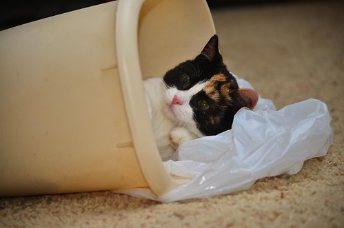 Bitsy helps to take out the trash. | by jeffreyw