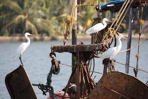 Backwaters, egrets | by Arian Zwegers