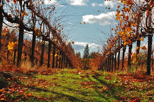 county autumn colors harvest el after dorado goldenleaveswinery