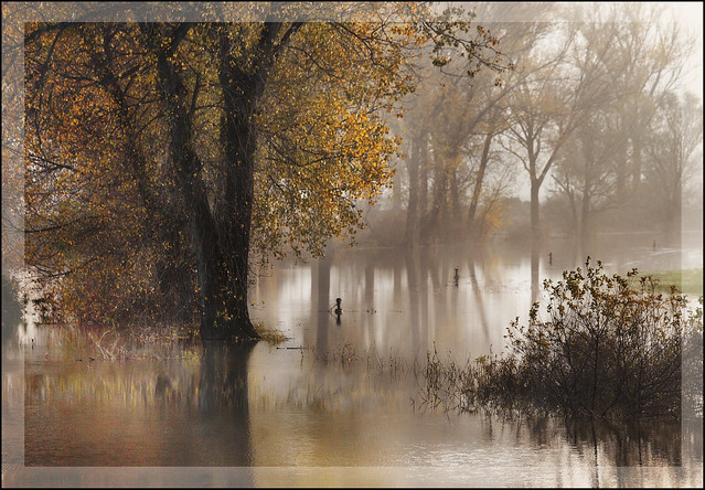 Autumn reflections  (Explored)