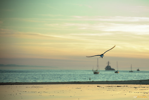 california sunset usa bird beach santabarbara freedom fly cyan free glide ziyanzhang