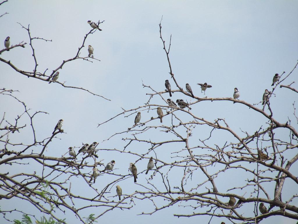 Um amotoado de aves