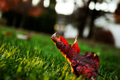 sunset fallleaves color bright
