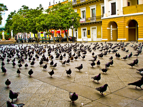 Plentiful Pigeons | by David Flagg