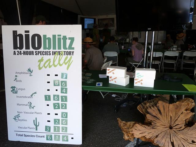 BioBlitz tally (not final)
