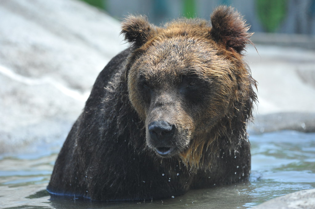 釧路市動物園20110710・11 016