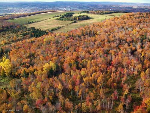 autumn trees fall novascotia view fallcolors aerial farmland foliage fields aerialphoto antigonish nspp antigonishcounty