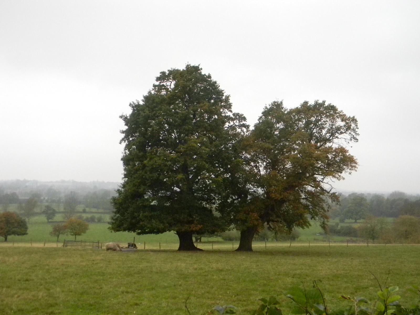 Trees Manningtree Circular