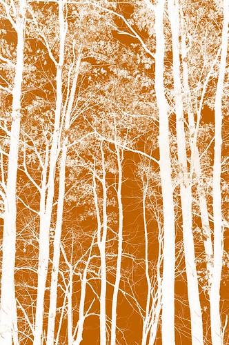 trees 6 leaves photoshop lens nikon elements kit 1855mm 1855 nikkor vr pse d90 omot