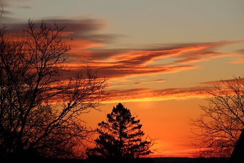 trees orange silhouette clouds sunrise