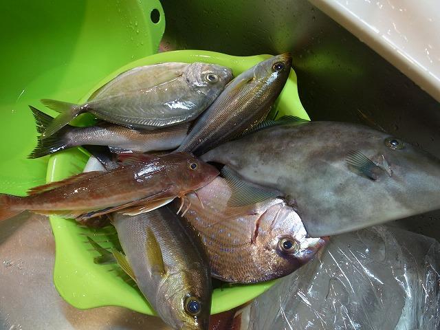 <p>a)釣ったその日に内臓とえらを取り除き、鮮度を保つ!今日の収獲</p>