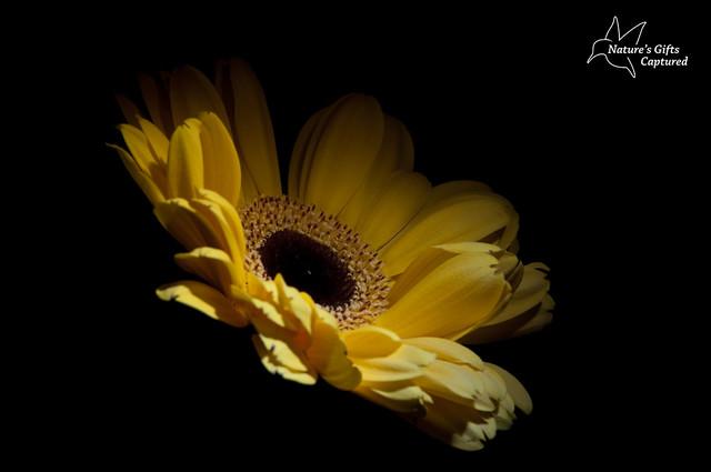 Shades Of Yellow LP