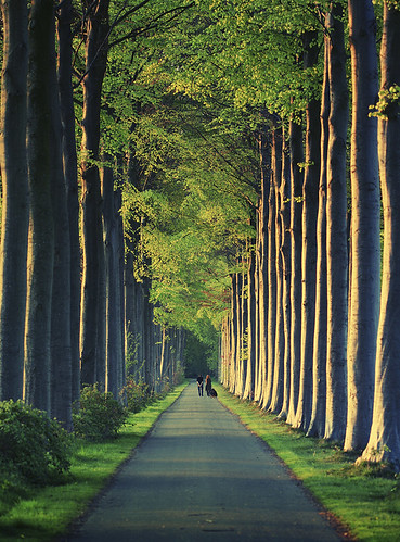 trees light sunset shadow people green nature leaves walking golden lane 100mmf28macro featuredonadidapcom
