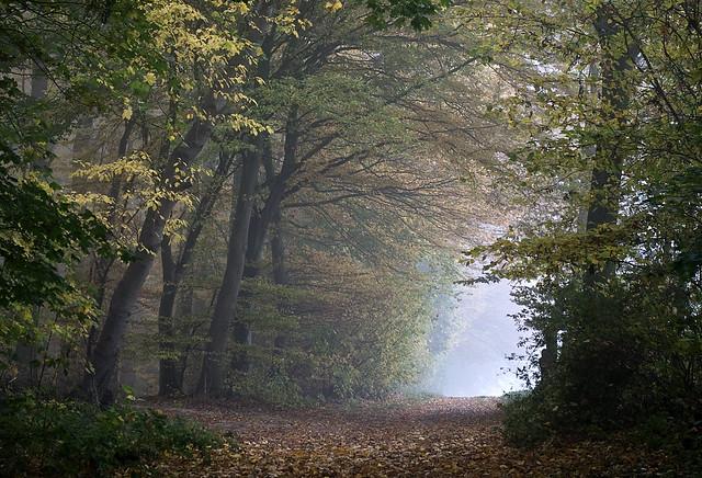 Walk into the light, Carol Anne! [explored #27 2011-11-04]