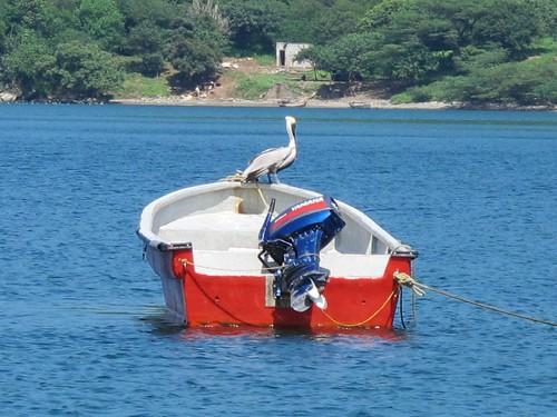 Off the coast in Bahia Concha | by margiehatch