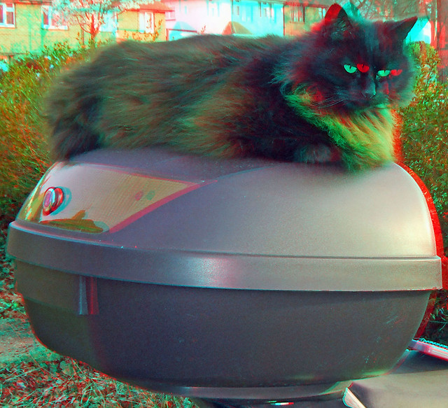 Cat on a box 3D anaglyph red blue glasses to view