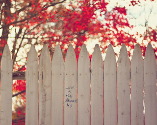 {Words of Wisdom} Fence Friday | by Jaime973