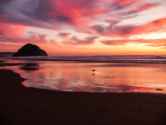 Morro Bay CA Pink Sunset over the Pacific Ocean at Morro Rock -- PhotoMorroBay.com Social Network 1024x1024 TheAppBuilder by JamPot Technologies  icon photomorrobay.com Morro Rock at sunset on Morro Strand State Beach, Morro Bay, CA
