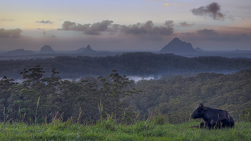 morning sky sun clouds sunrise landscape early day cows australia brisbane qld queensland glasshousemountains glasshouse sunshinecoast maleny morn baybreak bnegrass