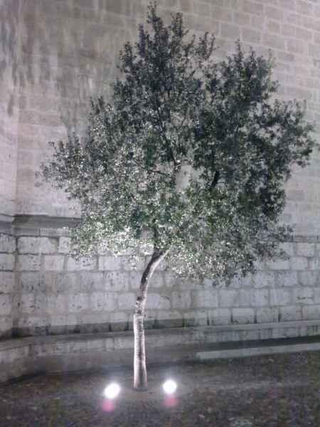 Árbol con foco de iluminación