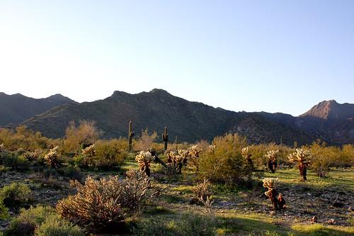 cactus usa canon az canondslr sonorandesert buckeye verrado canoneos40d