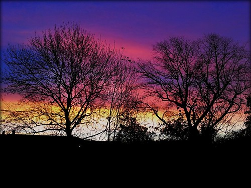 trees sun tree silhouette clouds sunrise dawn anewday colourfulskies skieswithcolour