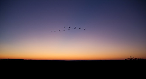 usa ma flying geese unitedstates essexcounty massachusetts sunsets v formations methuen merrimackvalleycountryclub merrimacvalleycountryclub