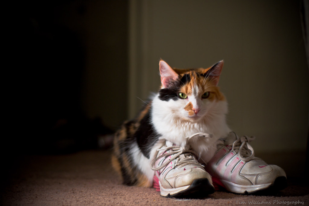 01b32dc404c21 Callie wearing shoes | by Tim_Williams Callie wearing shoes | by  Tim_Williams
