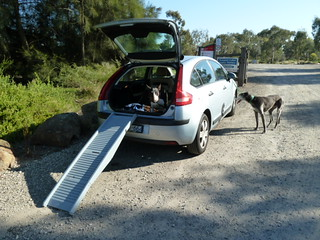 dogs and car and ramp | by annieb