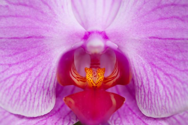 Tropical Gardens Of Maui 6926