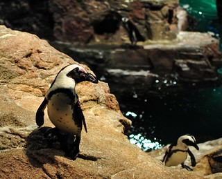 New England Aquarium | by angela n.