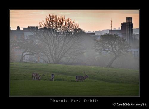 trees ireland dublin fog sunrise dawn deer phoenixpark