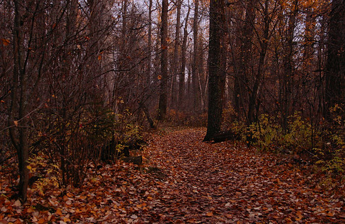 as the gloom settles into the woods | by waferboard