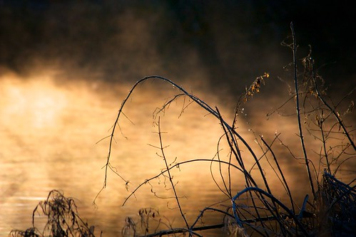 morning mist cold water river dawn buckingham greatouse