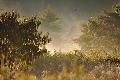 trees mist bird fog sunrise dawn newjersey meadow moorestownnj boundarycreeknaturalresourcearea