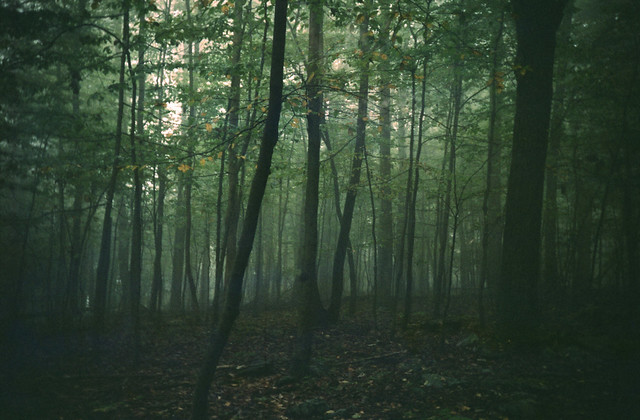 woodlands.