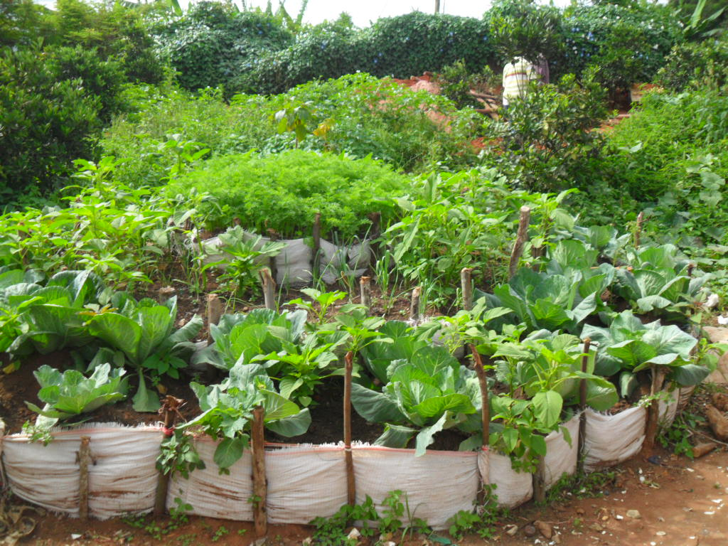 Kitchen Garden In The Middle Top Part Wastewater From Th Flickr