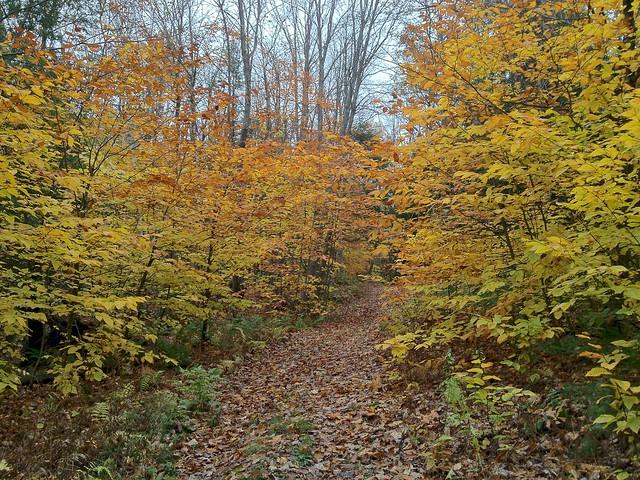 1:56:21 (70%): vermont hiking fairlee crossrivendelltrail baldtopmountain