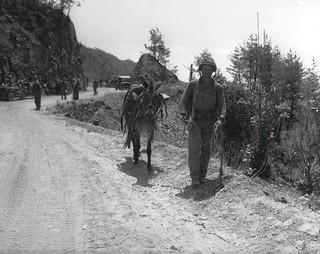 Ammunition Bearer, 28 May 1951