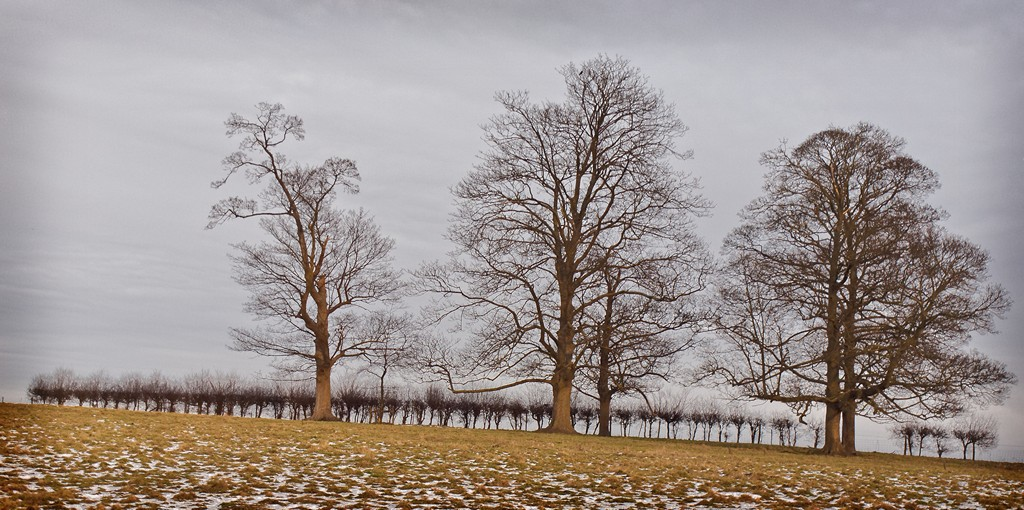 Trees on the horizon SWC_20101227_16_DxO_1024x768