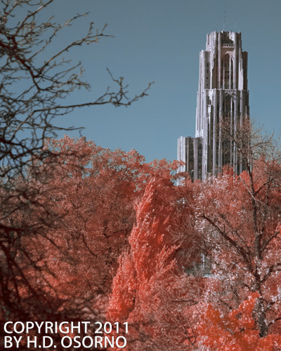 Cathedral of Learning VII