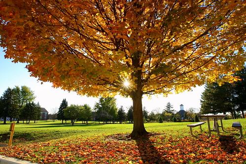 autumn fall colors leaves sunshine tayloruniversity