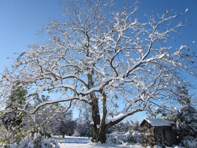 A day in the life of a tree | Let it snow let it snow let it… | Flickr