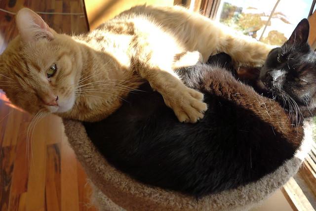 Irving and Lillian sharing sunshine