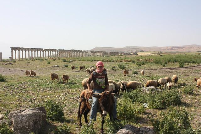 Apamea, shepherd