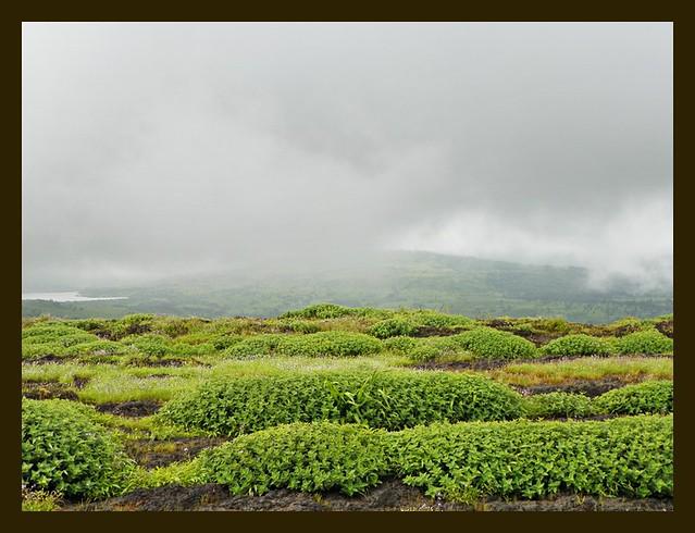 Rain clouds over the Pleocaulus clumps at Chalkewadi