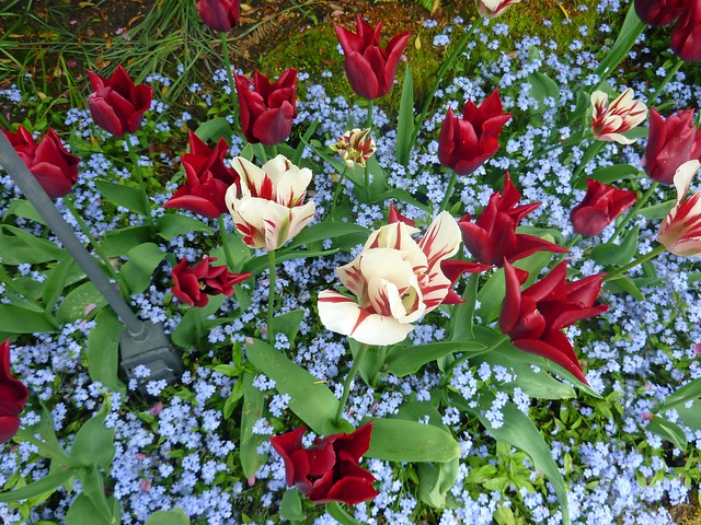 Mix of colors at the Butchart Gardens