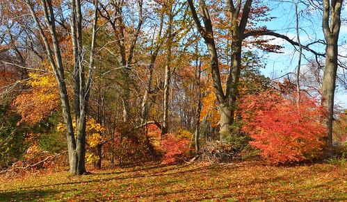 yard shelly cromwell autumn stitch johnjmurphyiii connecticut newengland november usa 06416 foliage